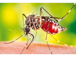 Малярия? Вам нужен Маларон
